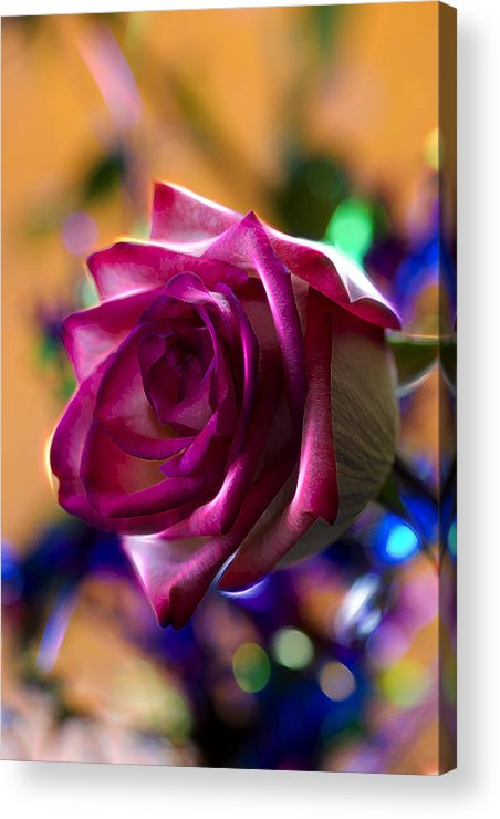 Rose Acrylic Print featuring the photograph Rose Celebration by Bill Tiepelman