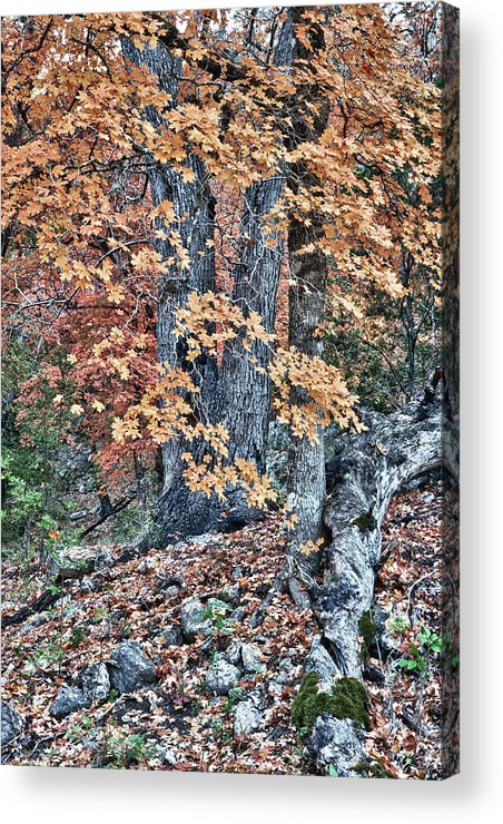 Landscape Acrylic Print featuring the photograph Season Change At Lost Maples by James Woody