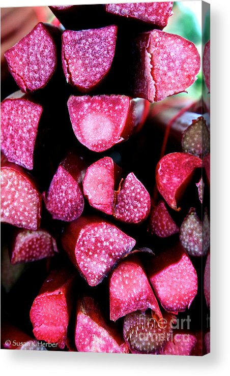 Food Acrylic Print featuring the photograph Seeking Pie Crust by Susan Herber