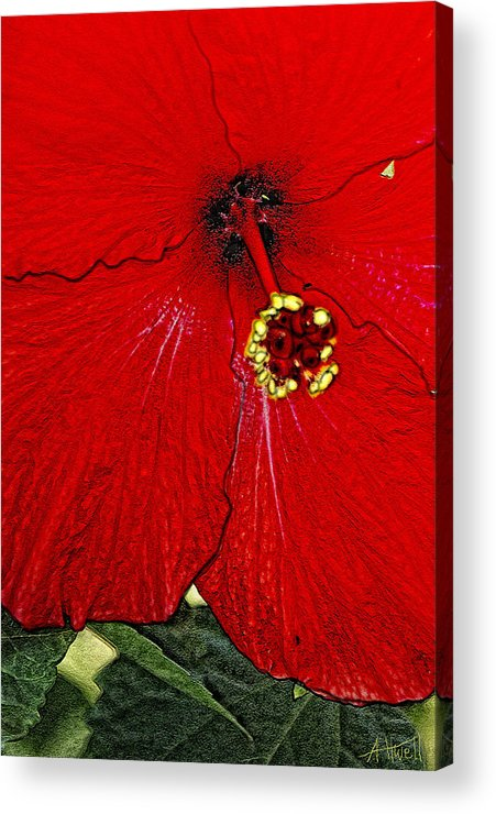 Flowers Acrylic Print featuring the digital art Self Centered by Marilyn Atwell