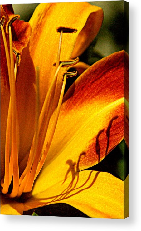 Orange Photographs Acrylic Print featuring the photograph Shadow Dancing by Tam Graff