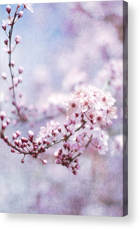 Pink Acrylic Print featuring the photograph Sing To Me by Rebecca Cozart