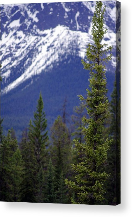Mountain Acrylic Print featuring the photograph Standing At The Base Of Greatness by Kelly Reich