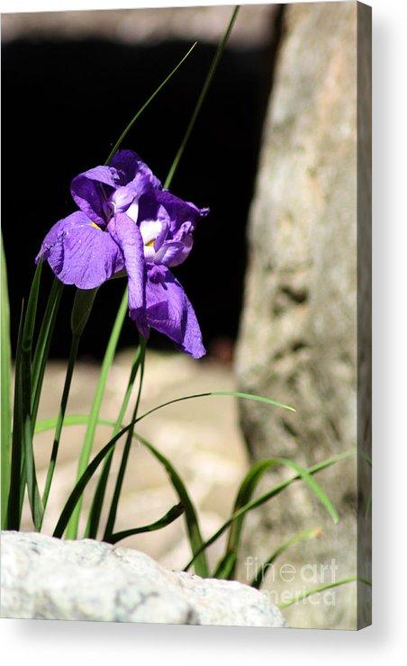 Iris Acrylic Print featuring the photograph Stone Garden 3 by Lauren Nicholson