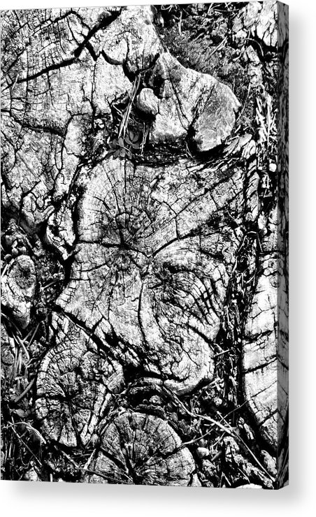 Tree Stump Acrylic Print featuring the photograph Stumped by Mike McGlothlen