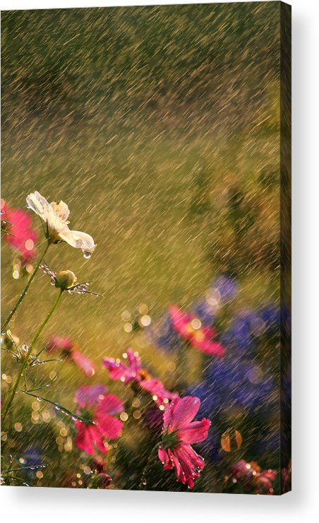 Beautiful Acrylic Print featuring the photograph Summer Rain by Darren Fisher
