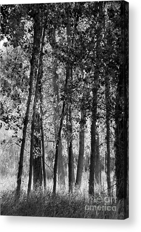 Trees Acrylic Print featuring the photograph Sunrising On The Trees by Yumi Johnson