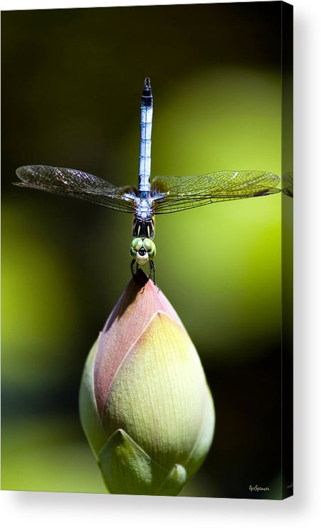 Insects Acrylic Print featuring the photograph T Shape by Lisa Spencer