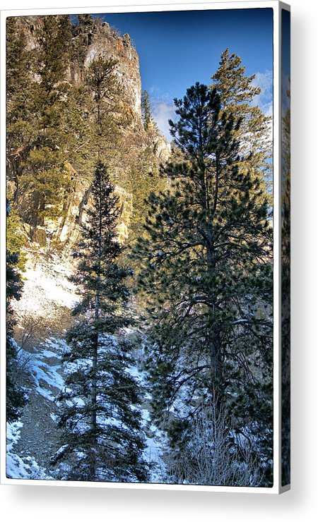 Mountain Acrylic Print featuring the photograph Tall Trees by Lisa Spencer