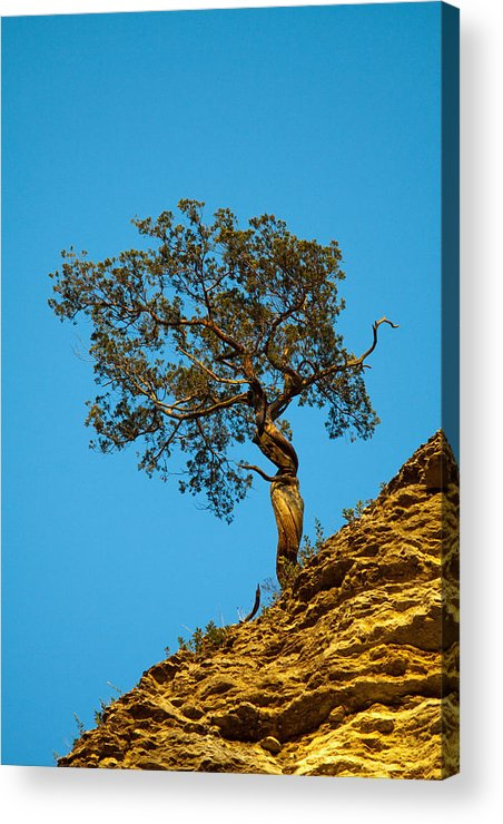 Tree Acrylic Print featuring the photograph The Dancer by Dan Lease