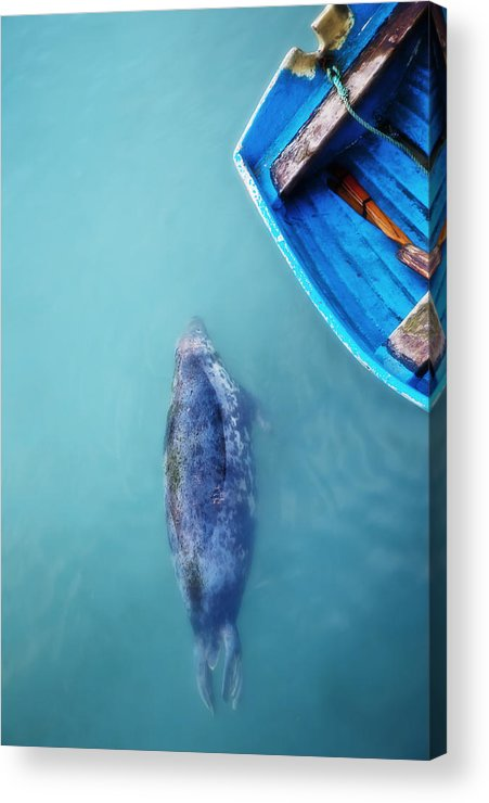 Grey Acrylic Print featuring the photograph The Grey Seal by Beth Riser