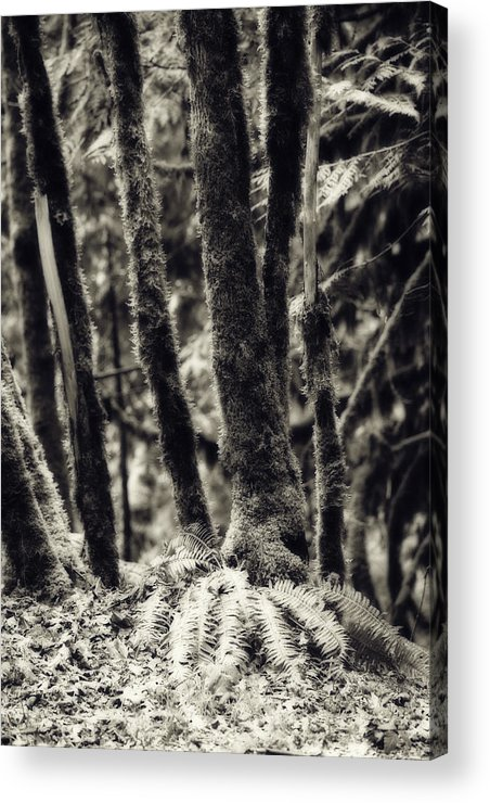 Woods Acrylic Print featuring the photograph The Silent Woods by Bonnie Bruno