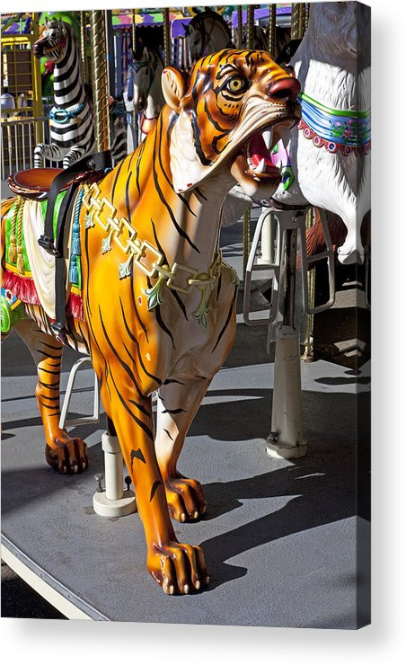Tiger Acrylic Print featuring the photograph Tiger Carousel Ride by Garry Gay
