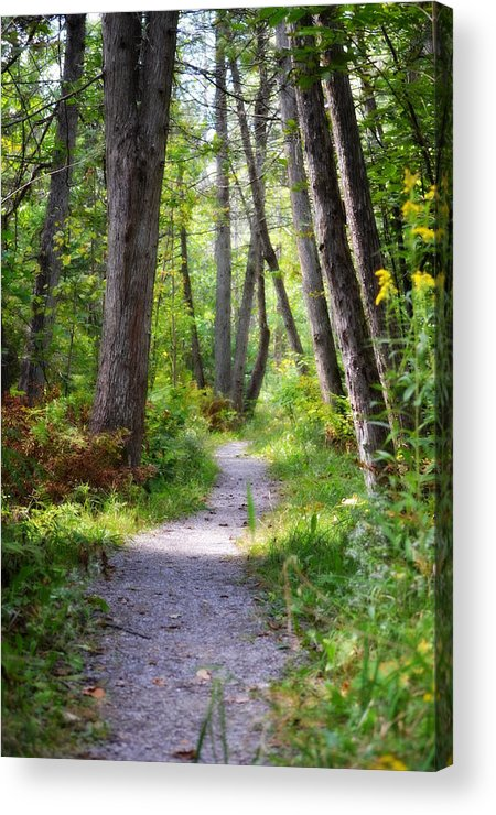 Pathways Acrylic Print featuring the photograph Trail3 by Jennifer King