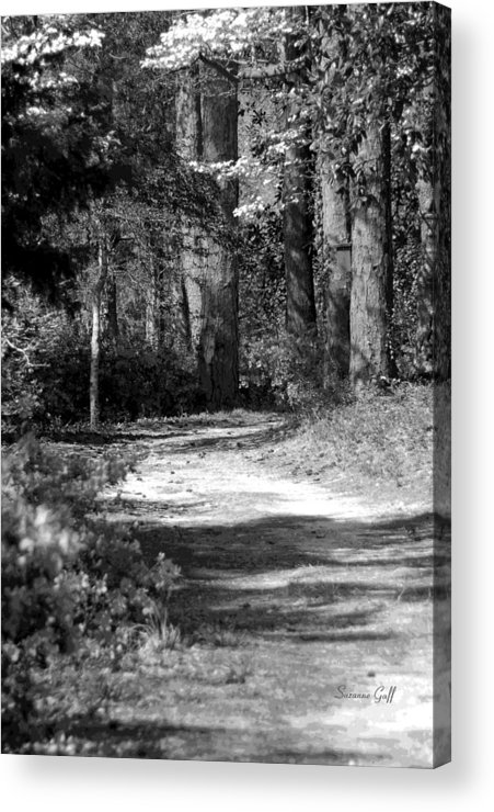 Black And White Acrylic Print featuring the photograph Walking In The Springtime Woods In Black And White by Suzanne Gaff
