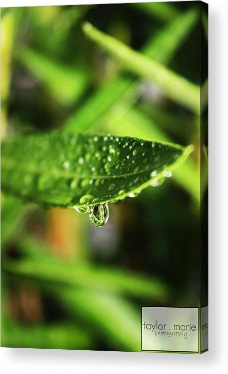 Rain Acrylic Print featuring the photograph Water Drop by Taylor Todd