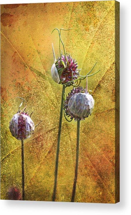 Wild Acrylic Print featuring the photograph Wild Allium Ala Grunge by Kathy Clark