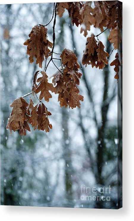 Sandra Bronstein Acrylic Print featuring the photograph Winter Takes Hold by Sandra Bronstein