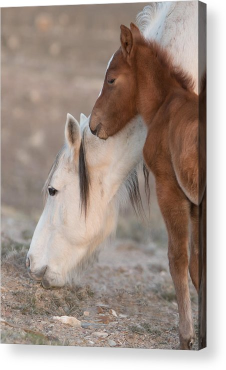 Horse Acrylic Print featuring the photograph Bonding by Kent Keller