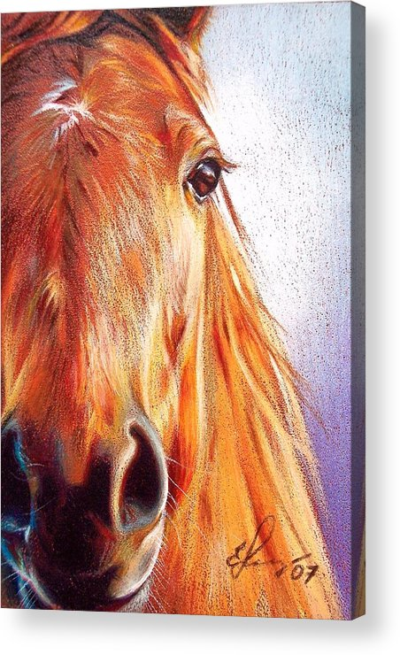 Horse Animal Art Equine Drawing Portrait Acrylic Print featuring the drawing Chestnut by Elena Kolotusha
