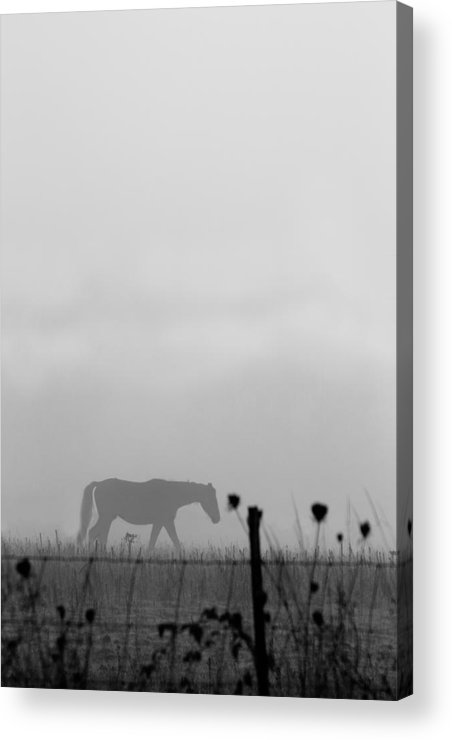 Horse Acrylic Print featuring the photograph Ghost Horse by Rebecca Cozart