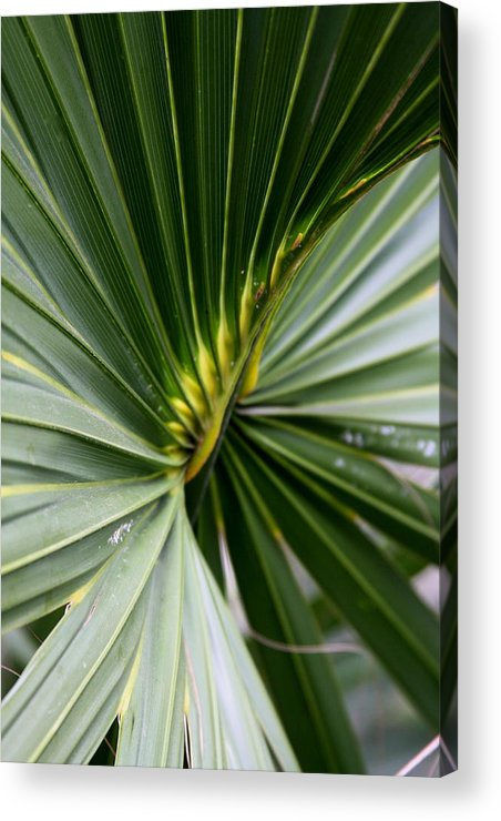 Fern Acrylic Print featuring the photograph Green Fan by Kenna Westerman