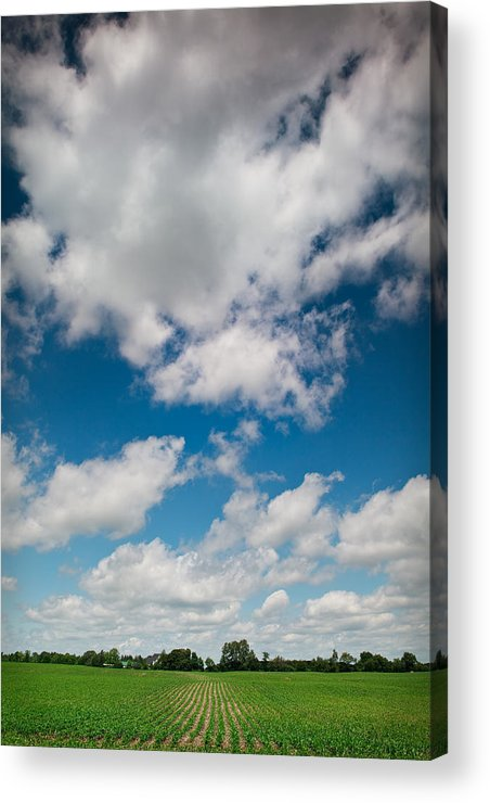 Blue Acrylic Print featuring the photograph Midwest Corn Field by Steve Gadomski