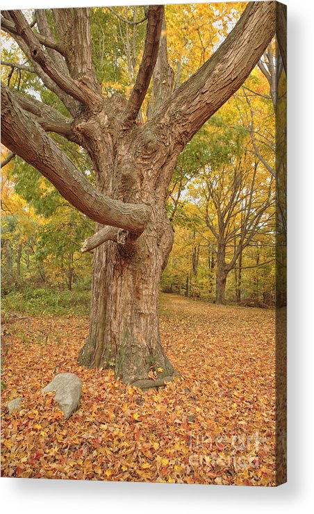 Fall Acrylic Print featuring the photograph Odiorne Point State Park - Rye New Hampshire by Erin Paul Donovan