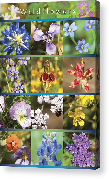 Wildflowers Acrylic Print featuring the photograph Spring Wildflowers II by Stephen Anderson