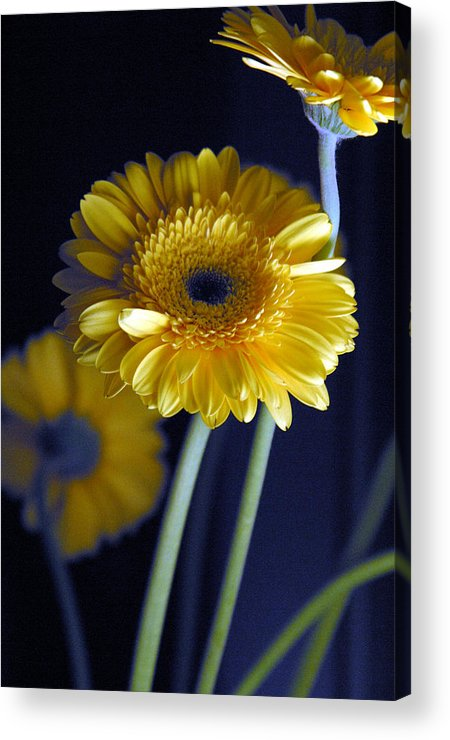 Photographer Acrylic Print featuring the photograph Stretching Out by Jez C Self