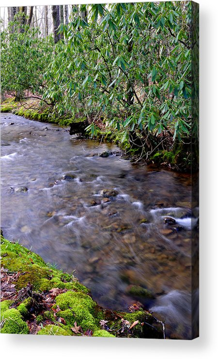 West Virginia Acrylic Print featuring the photograph Middle Fork Of Williams River by Thomas R Fletcher