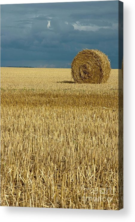 Agricultural Acrylic Print featuring the photograph Hay Bales In Harvested Corn Field by Sami Sarkis
