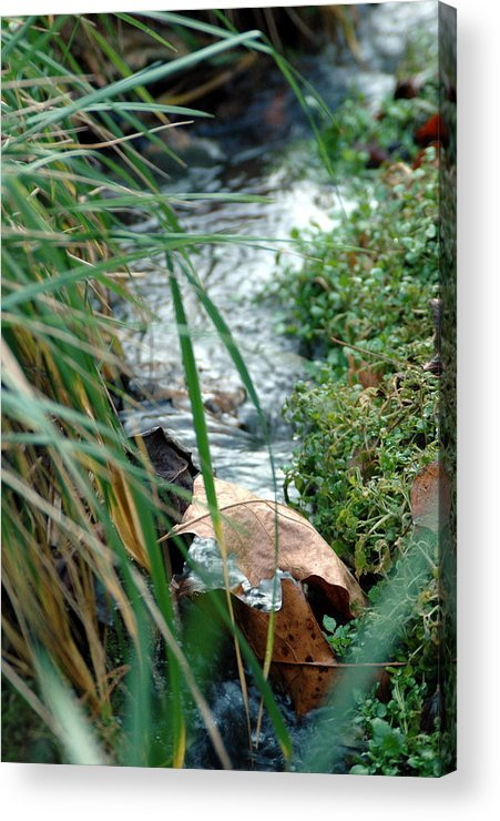 Stream Acrylic Print featuring the photograph Untitled by Kathy Schumann