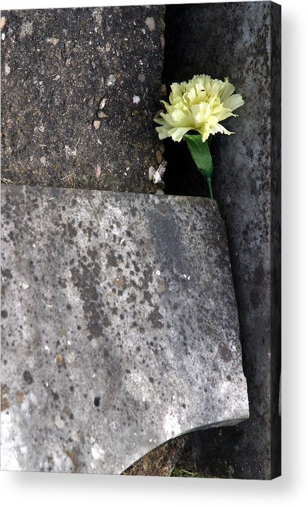 Photographer Acrylic Print featuring the photograph Hidden by Jez C Self