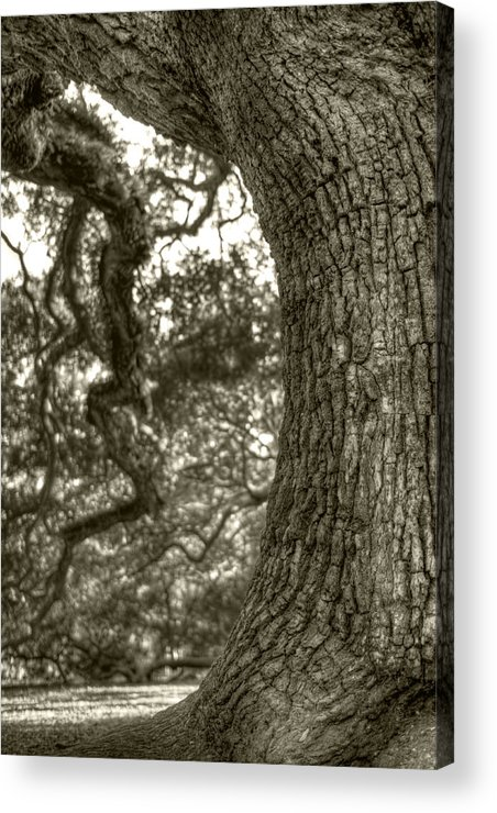 Live Oak Acrylic Print featuring the photograph Angel Oak Live Oak Tree by Dustin K Ryan
