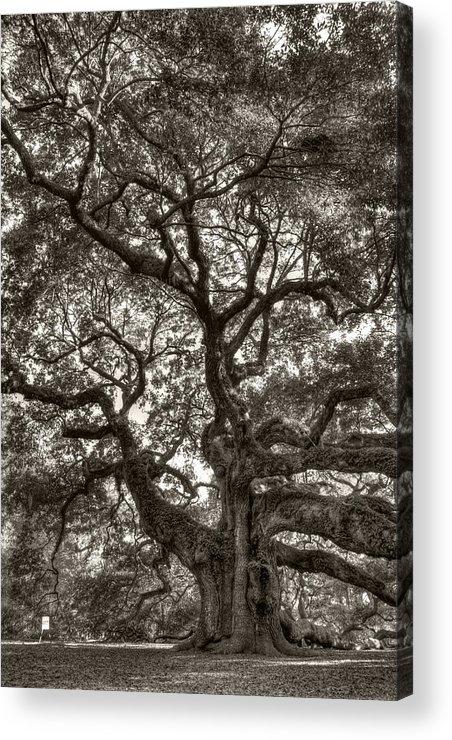 Angel Oak Acrylic Print featuring the photograph Angel Oak Live Oak Tree by Dustin K Ryan
