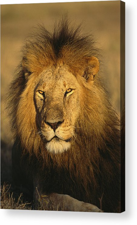 Africa Acrylic Print featuring the photograph A Portrait Of A Male by National Geographic