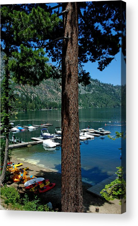 Usa Acrylic Print featuring the photograph A Trees View Of Fallen Leaf Lake by LeeAnn McLaneGoetz McLaneGoetzStudioLLCcom