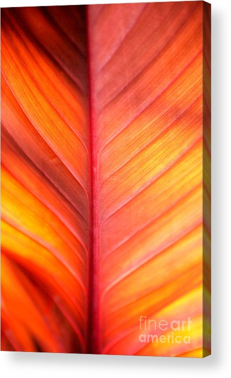 Pattern Acrylic Print featuring the photograph Abstract by Tony Cordoza