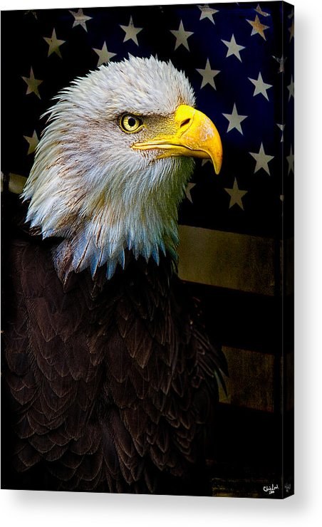 Eagle Acrylic Print featuring the photograph An American Icon by Chris Lord