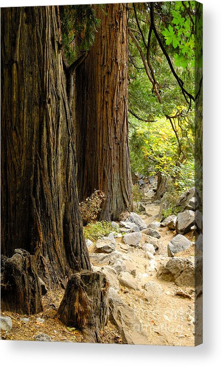 Tree Acrylic Print featuring the photograph Angel Trail by Marian Kraus