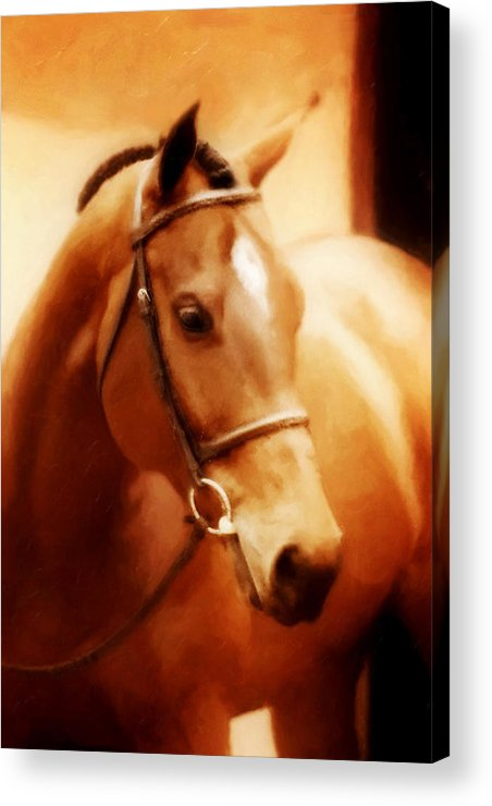Horse Acrylic Print featuring the photograph Angela by Nick Sokoloff