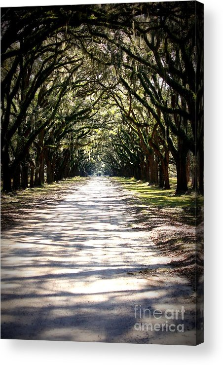 Live Oaks Acrylic Print featuring the photograph Anticipation by Carol Groenen