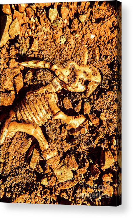 Styracosaurus Acrylic Print featuring the photograph Archaeology Dig by Jorgo Photography - Wall Art Gallery