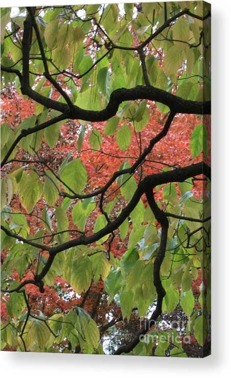 Fall Acrylic Print featuring the photograph Autumn 7 by Carol Groenen