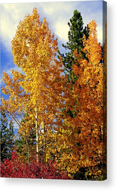 Autumn Colors Acrylic Print featuring the photograph Autumn Colors by Lynn Bawden
