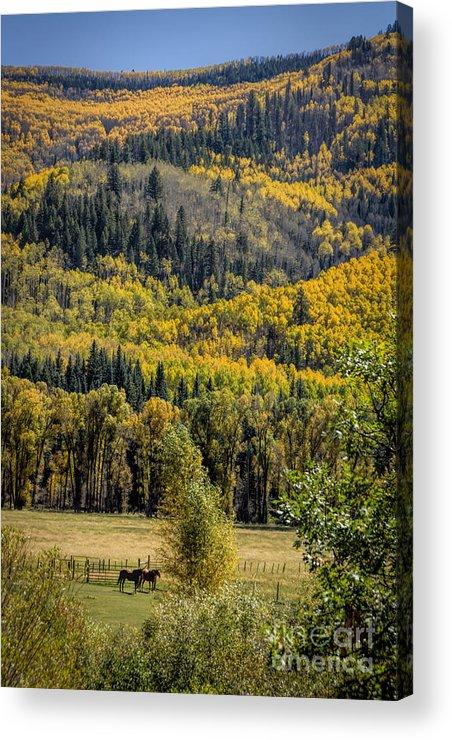 Autumn Acrylic Print featuring the photograph Autumn On A Colorado Range by Janice Pariza