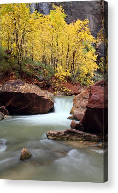 Zion Acrylic Print featuring the photograph Autumn Virgin River In Zion by Pierre Leclerc Photography