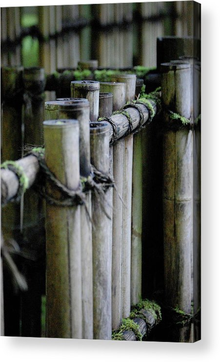 Bamboo Acrylic Print featuring the photograph Bamboo Fence by Samantha Kimble