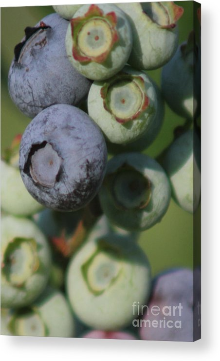 Blueberry Acrylic Print featuring the photograph Big Berry by Lewis Lowell
